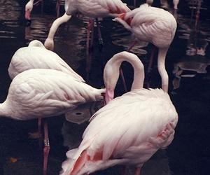 flamingo, pink, and animal image