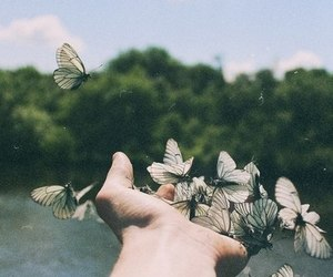 butterfly, hand, and nature image