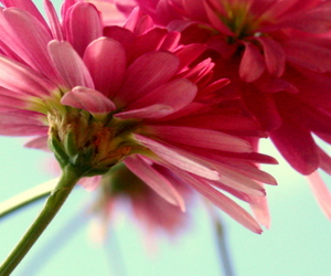 flower, summmer, and pink image
