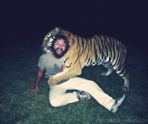 tiger, hangover, and the hangover image