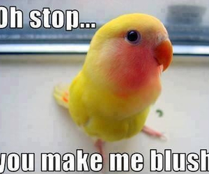 bird, funny, and blush image