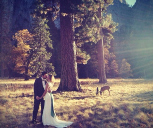 deer, kiss, and nature image