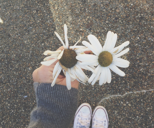 cold, converse, and daisy image