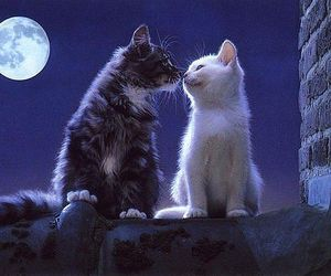cat, animal, and moon image