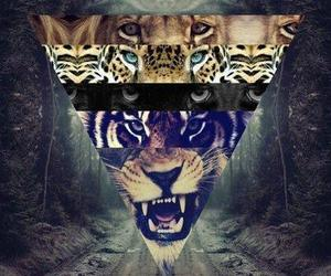 tigers and lions. trees image