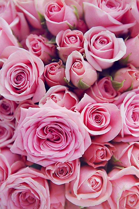 Image about pink roses in theyre flowers and theyre mine by bletchly mightylinksfo