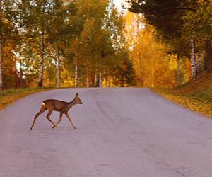 autumn, sweden, and venison image