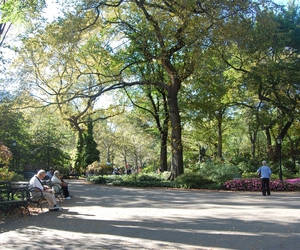 Central Park, people, and trees image