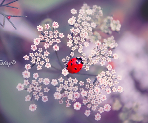 ladybug, flowers, and red image