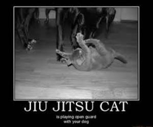 cat, cats, and combate image