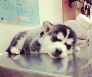 cute, dog, and husky image
