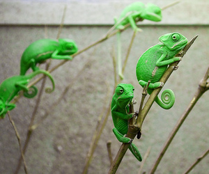 green, chameleon, and animal image
