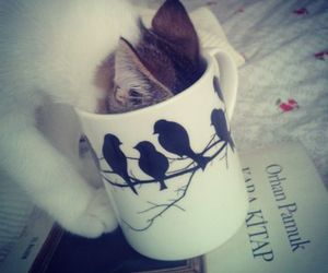book, cat, and cup image