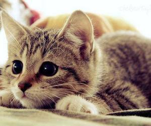 eye, kitten, and funny image