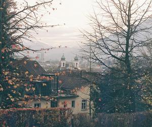 autumn, vintage, and tree image