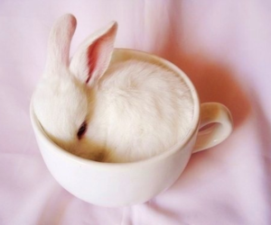 adorable, bunny, and cup image