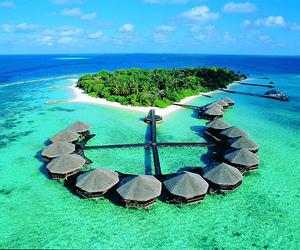 beach, Island, and Maldives image