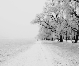 snow, winter, and fog image