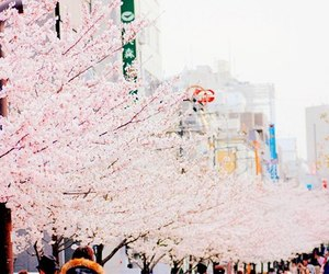 japan, photography, and sakura image