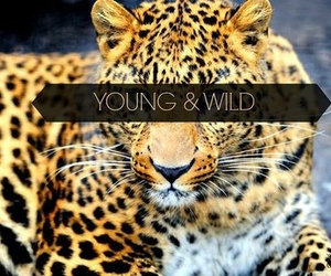 wild, young, and tiger image
