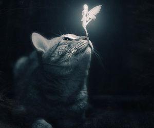cat, fairy, and fantasy image