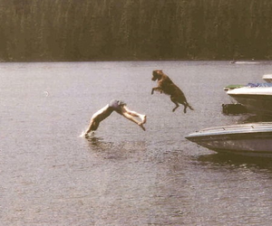 dog, lake, and jump image