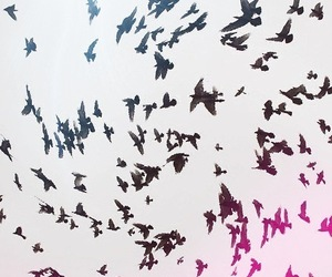 black, birds, and pink image
