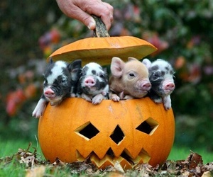 pig, pumpkin, and Halloween image