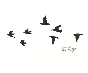bird, let it go, and fly image