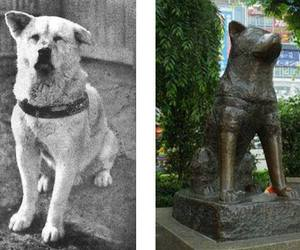 dog, hachiko, and statue image