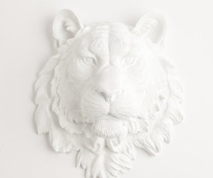 lion and white image