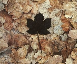 autumn, leaves, and black image