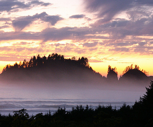 alison, brown, and la push image