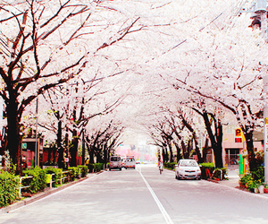 cherry blossom, cute, and japan image