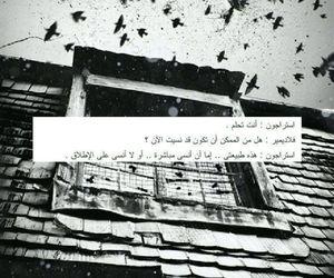 arabic, dark, and طيور image