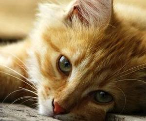 cat, nice cat, and cats image