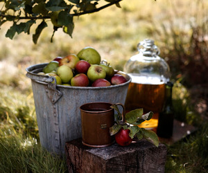 apple, autumn, and nature image