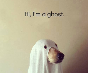 dog, ghost, and hi image