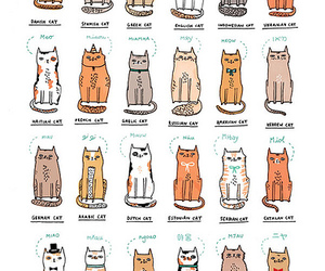 gemma correll and world of kitties image