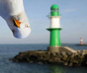 funny, lighthouse, and sea image