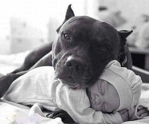 adorable, baby, and buddies image