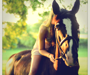 black horse, countryside, and equine image