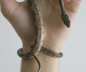 snake, tattoo, and hand image
