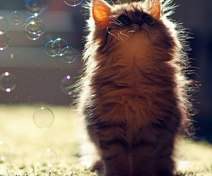 cat, cute, and bubbles image