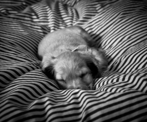 black and white, puppy, and sleeping image