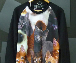 cat, sweatshirt, and animal sweater image