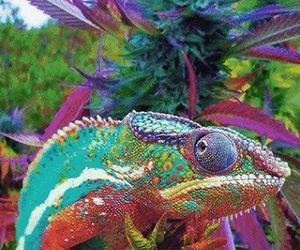 weed, animal, and chameleon image
