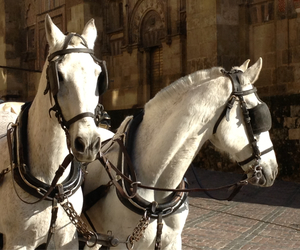 beautiful, chevaux, and horse image