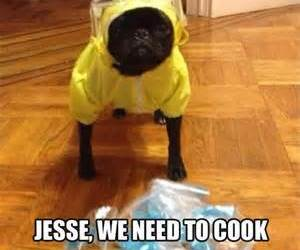 breaking bad and dog image