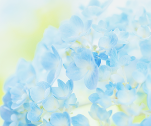 blue, flowers, and beautiful image